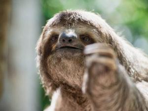 Jaco Photographer, Sloth in costa Rica, Wildlife Costa Rica, Wildlife Photography,